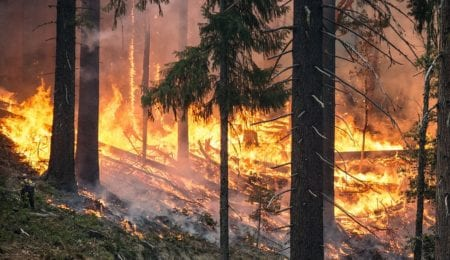 Oregon Teenager Must Pay $36.6 Million After Starting Forest Fire